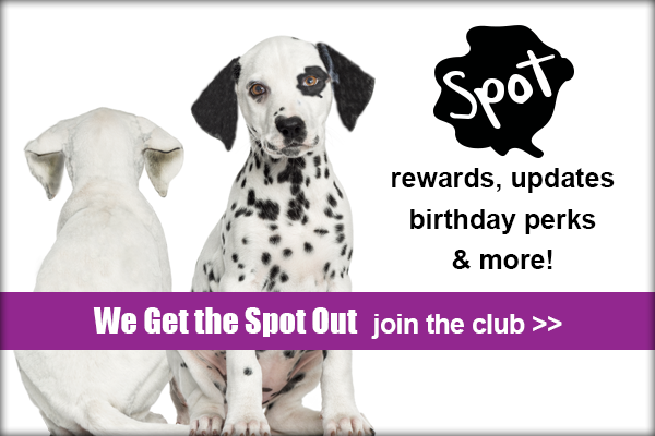 We get the spot out, join the club, Spot Rewards, updates, birthday perks & More